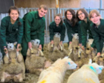 Vet Students with Sheeps
