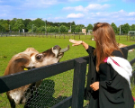 graduating student and cow