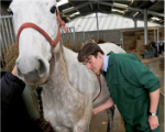 Vet student with horse
