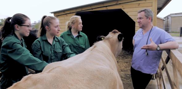 Vets with cow